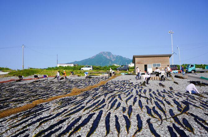 【北海道利尻島】昆布漁|從昆布的採收到進倉庫,完整大公開。