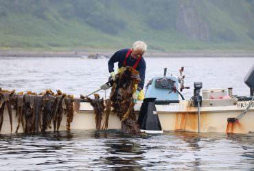 【北海道知床半島】有一百年歷史的羅臼昆布文化